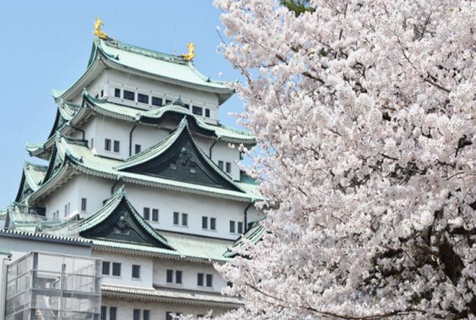 名古屋市内の観光客は増加しています。名古屋城など人気のスポットを貸切バスで移動。